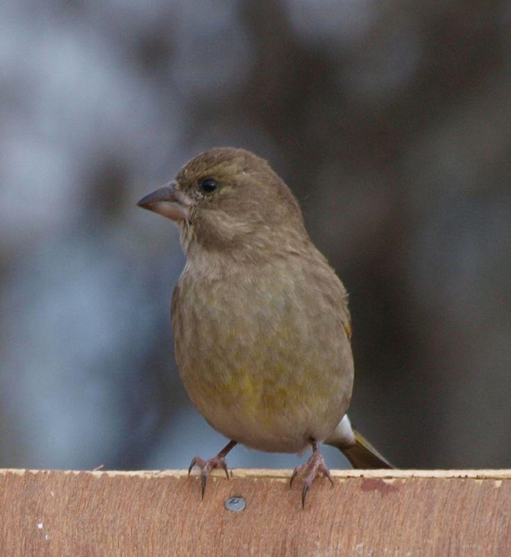 Liten fugl i Fagerli