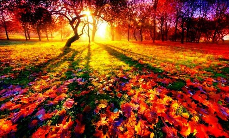 Awesome Autumn Shot!