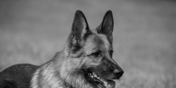 Strengthen Animal Cruelty Laws in New York!