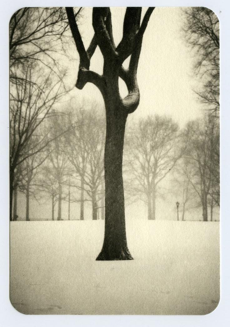 One of my prints - Tree, Central Park - Platinum print - www.jeffersonhayman.com