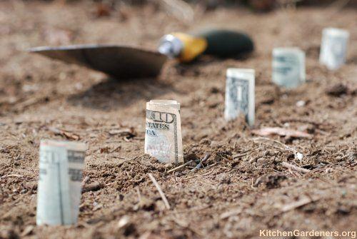 Most profitable vegetables.: Save Money, Squares Foot, Saving Money, Money Save, Vegetables Gardens, Profit Plants, Grocery Stores, Money Trees, Gardens Plants