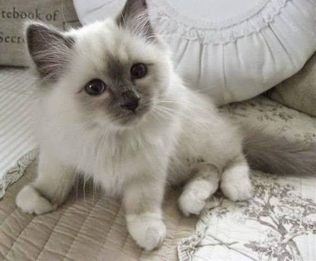 Time for a really cute kitten…that looks just like my Mom's cat when it was young. She's still pretty now & living with me.