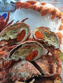Araignée de mer exceptionnelles chez Pierrot!!! www.coquillagespierrot.com