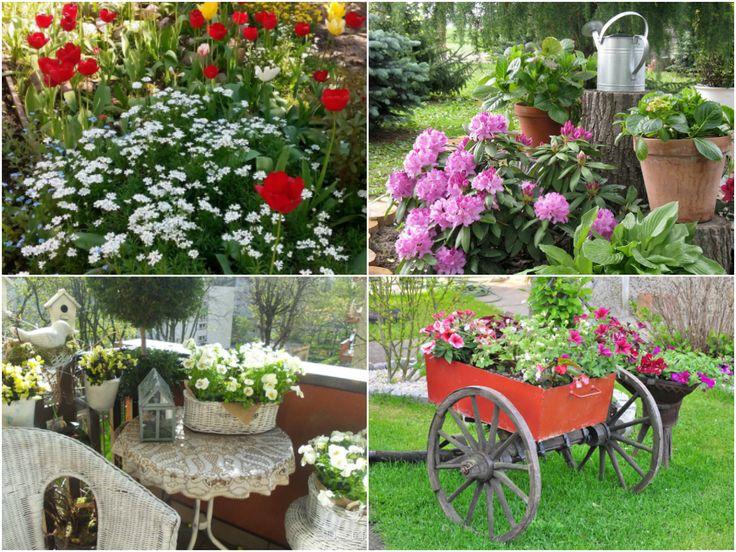 Zdjęcia nadesłane na wiosenny konkurs - pomysł na ogród w skrzynce. #kwiaty #hydrobox #hydroboxpl #flowers #watering #rododendron #bratki #tulipany #surfinie #pelargonie #wiosna #inspiracje #diy #handmade #vintage #recycling #ideas #inspiration