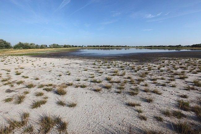 Sziki Őszirózsa Tanösvény: Sekély vizű szikes tó