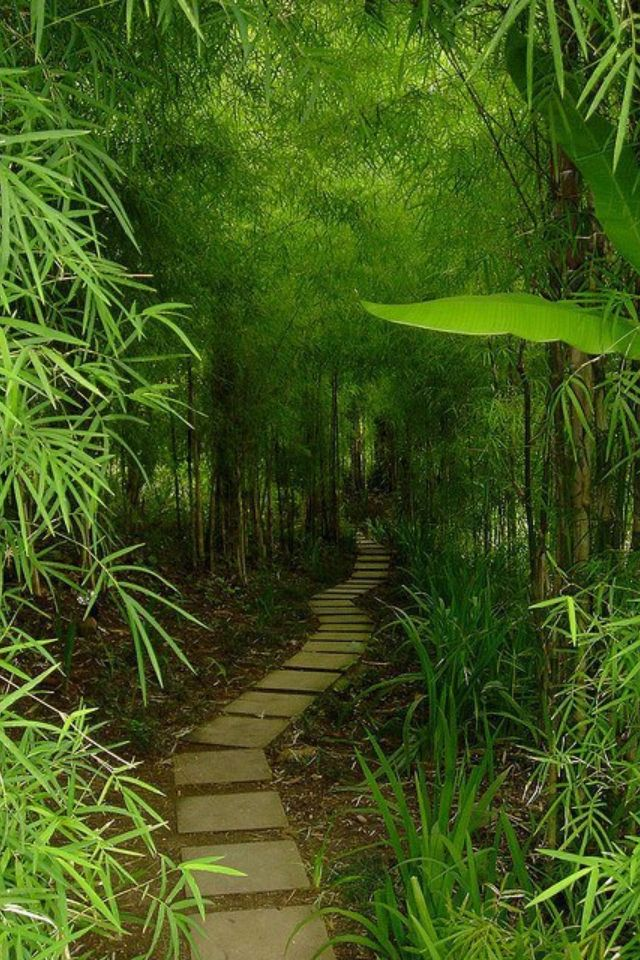 Beautiful bamboo garden, i want one of these.  I'm going to try to bring the starter piece of bamboo home from our wedding trip in Japan.