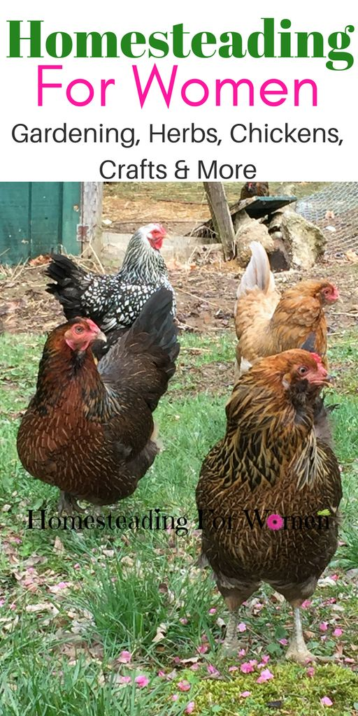 Homesteading For Women—see new year's resolutions follow up for realistic picture of day-to-day successes (and failures)