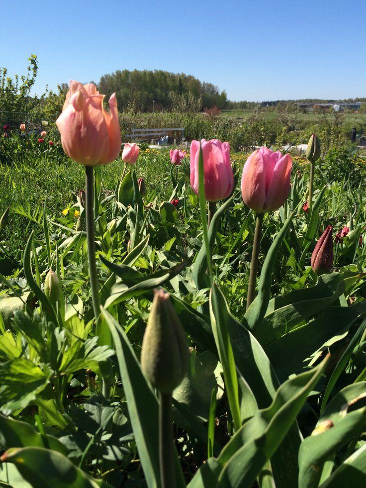 May in Viikki, Helsinki