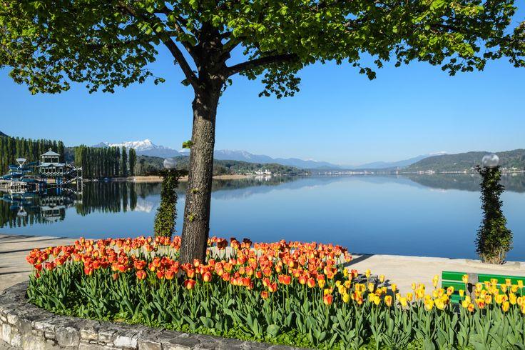 Foto Frühling in Klagenfurt am Wörthersee | Frühjahr Klagenfurt ...