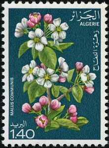 Stamp: Apple (Algeria) (Flowering trees) Mi:DZ 721,Sn:DZ 610,Yt:DZ 682