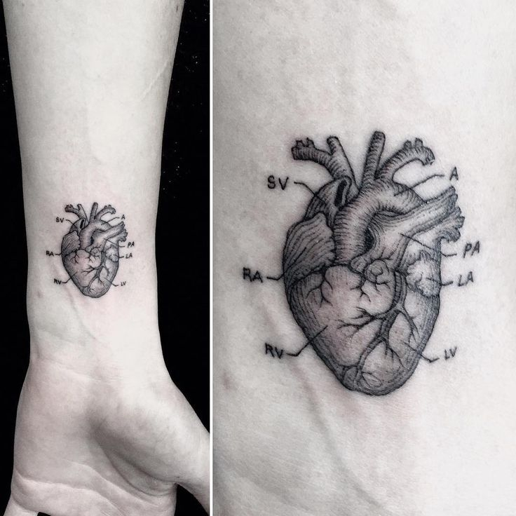 about Anatomical Heart Tattoos on Pinterest | Anatomical heart, Heart ... Anatomical Heart Outline Tattoo
