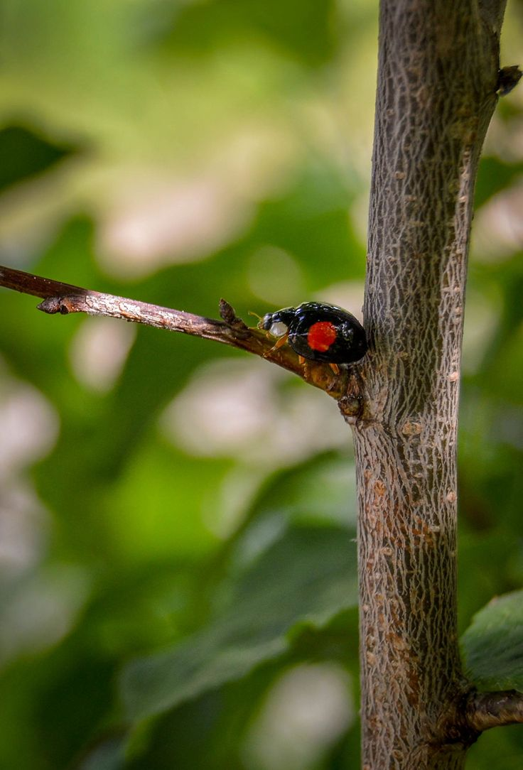 Tree Insect Beauty In Nature No People Outdoors Close-up Nature Insect Photography Naturephotography Nature Photography Beauty In Nature Insects  Bug