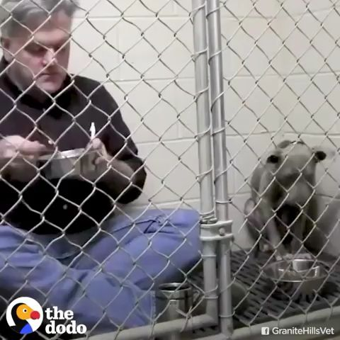 climbed into a scared rescue dog's cage to eat meals with her until she wasn't afraid anymore — then – GIFs & Videos
