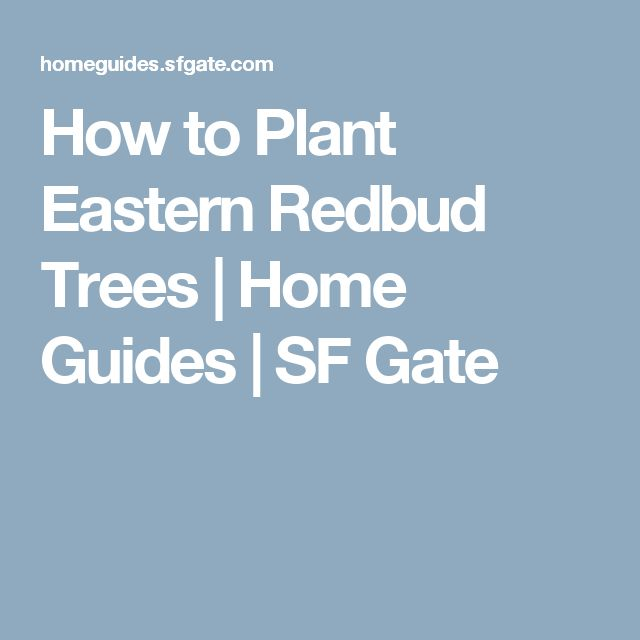 How to Plant Eastern Redbud Trees | Home Guides | SF Gate