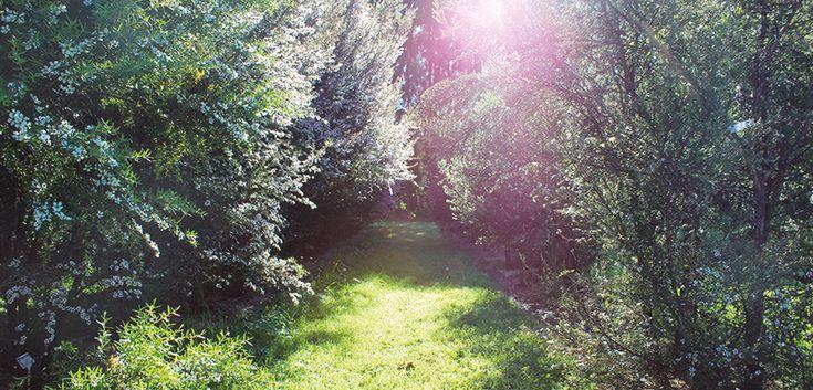 Planting Marginal Land