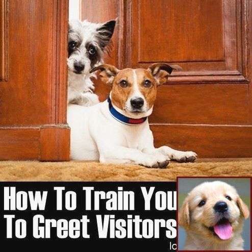 Best Way To Train A Dominant Dog And Training Tips For My Dog And