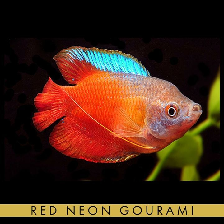 Expomx In Online Shopping For Pets Plant And Supplies In 2020 Aquarium Fish Tropical Fish Fresh Water Fish Tank
