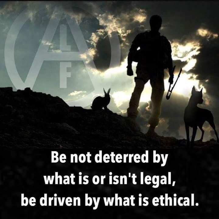 Animal Liberation Victoria: 47 Best Images About Animal Liberation! On Pinterest