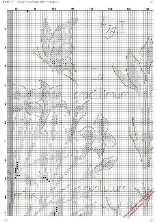 Cross stitch - flowers: botanicals - Jasminum officinale - jasmine (chart - part A2)