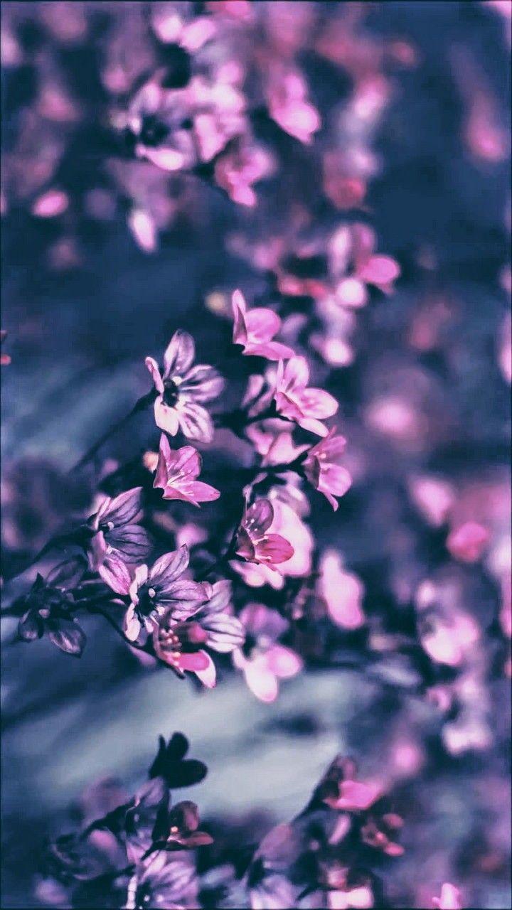 Pin By Riya Rawat On Dark Bloom Flowers Photography Vintage
