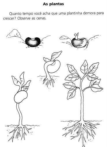 ativ. plantas - Jane Lucia - Picasa Web Albums: