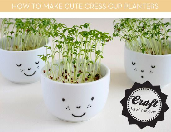 Cute DIY Cress Cup Planters --  fun gift idea for green-thumbed friends. :)