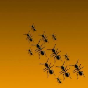 Cómo reaccionar ante picaduras de hormigas de fuego