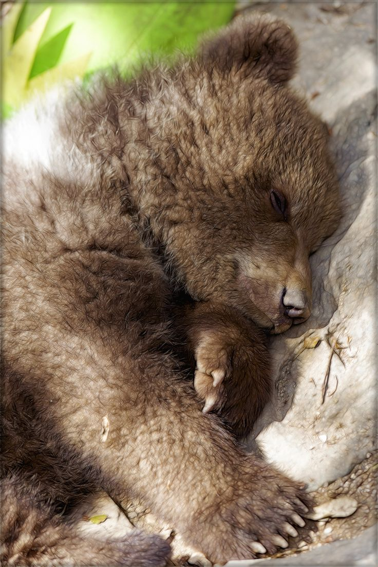 I'm feeling warm and cozy all over... sweet napping bear cub...*-* - null by Pepe Alcaide