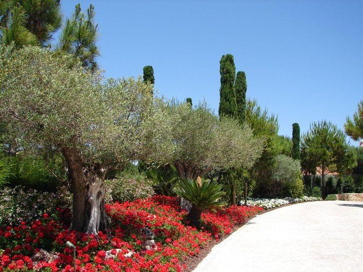 jardim mediterrâneo