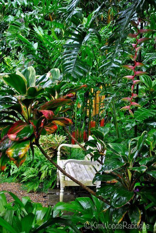 Gdy tęsknimy za latem. Jesienią oraz zimą często brakuje nam słońca. Doskwiera nam także niedosyt zieleni. Nawet najlepszy ogrodnik nie jest bowiem w stanie sprawić, by ogród utrzymywał swoją świetność przez okrągły rok. W momentach, gdy tęsknimy za latem, wakacjami i słońcem, dobrze jest wybrać się w miejsce, gdzie zieleni będzie pod dostatkiem. Warto wybrać się np. do palmiarni, gdzie znajdziemy wspaniałe rośliny. #ogród #rośliny #tropikalne ##ławka
