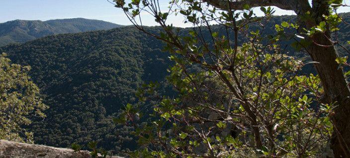 La Foresta de Is Cannoneris