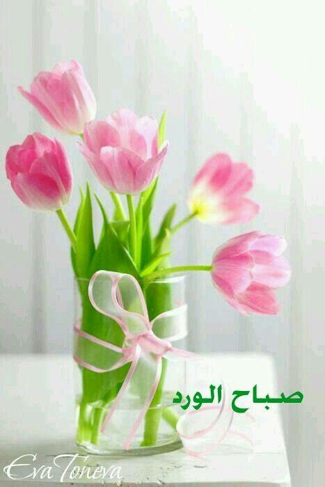 صباح الورد احبتي صباح الخير أحبتي | صباح ومساء الخير أحبتي ...