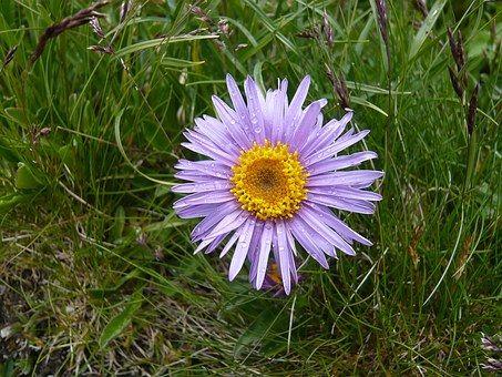 Kwiat, Purpurowy, Charakter, Roślin
