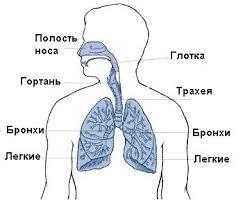 Дыхательная система - консультация, аллерголог, диагностика, гастроэнтеролог,  гепатолог, невропатолог, онколог,ЛОР, офтальмолог, психиатр, нарколог, дерматолог,имунолог, лечащий врач, диетолог,  эндокринолог  кардиолог