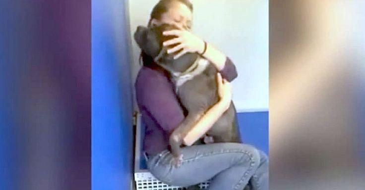 En 2013, Georgia Obenaus, présidente et fondatrice du centre d'adoption d'animaux domestiques Go Rescue de Virginia Beach, a croisé le…