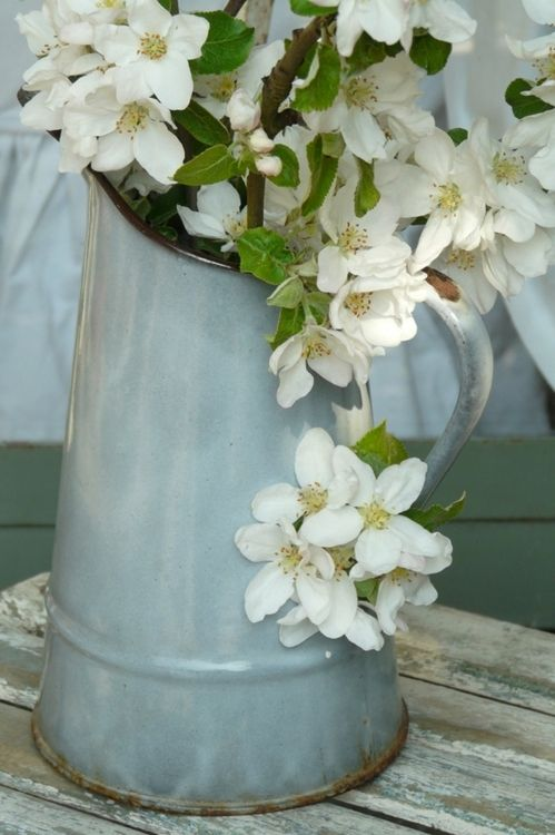 branches of philadelphus (mock orange blossom) in a blue-grey enamel jug - the blooms soon drop, but do smell wonderful