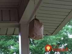 Túto vec mi poradil minulý rok sused: Premnožené osy sa zo záhrady stratili takmer okamžite!