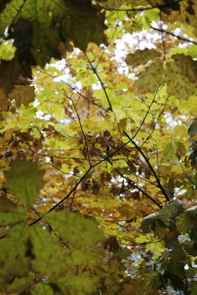 Autumn by Maciej Zdun
