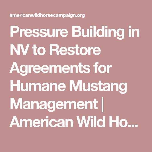 988 best American Wild Horse Preservation images on Pinterest - domestic partnership agreement