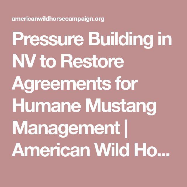 988 best American Wild Horse Preservation images on Pinterest - management agreements