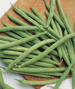 blue lake bush beans how to grow