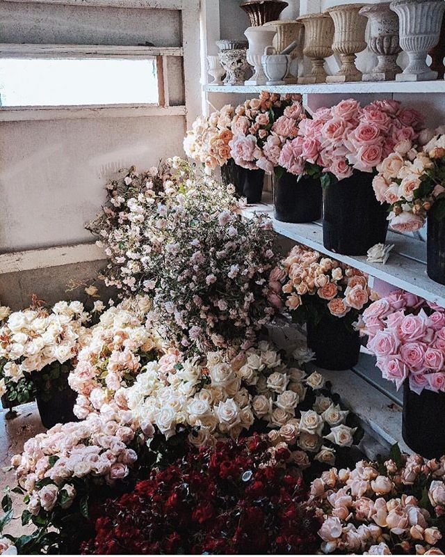 Girls best friend || All the roses via @boutierre_girls  #flowers #inbloom #beachgoldinspo
