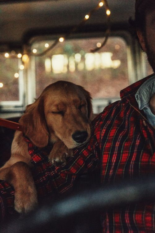 """kieljamespatrick: """"Flandana for your pet and matching Cozy Cabin Flannel for you """""""