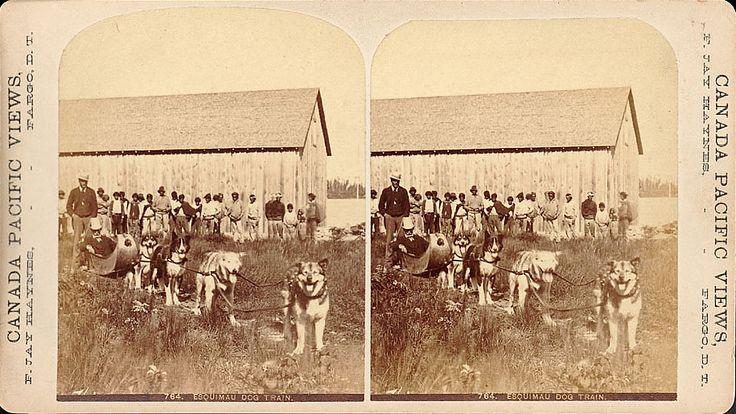 Эскимосская собачья упряжка, 1881 год.