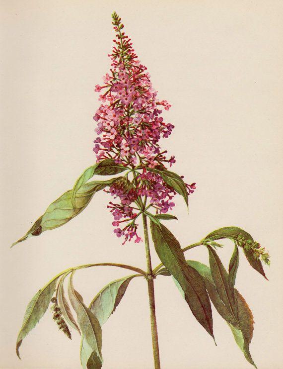 318 Best Images About Art Botanique Aquarelles Fleurs