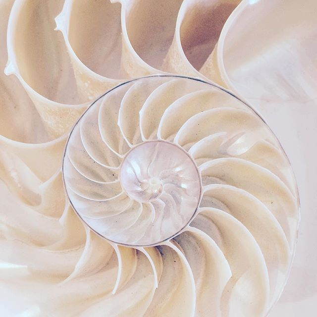 """• w e i s s • """"Alles wiederholt sich, geht in #Spiralen. Das #Leben ist ein Bild ohne Rahmen. Die #Zukunft ist ein Kind ohne Namen. Der Wind will uns sagen: Jemand anders mischt das Spiel  wir sind nur die Karten."""" [Friedrich Kautz] #novembernuancen #Mafflumomente #Muschel #weiss #Spirale #shell #seashell #white"""