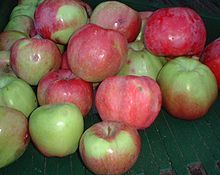 Northern Spy apples my favorite baking apple here in the