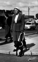 History of Guide Dogs in Australia