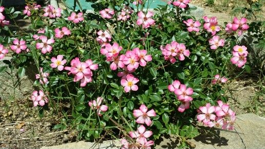 Giardino fiorito.