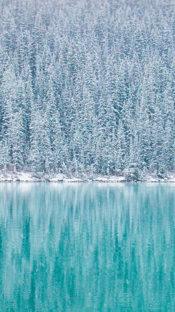 Pine Trees Winter Reflections Blue Lake 720x1280 Wallpaper